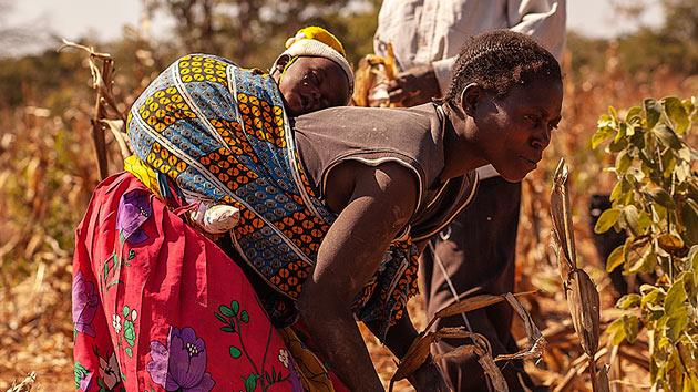 6 problemas a los que se enfrenta un campesino en Angola