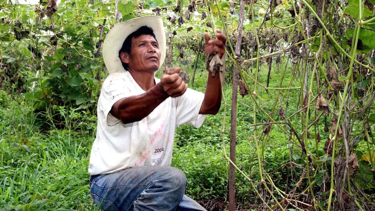Emilpa en Guatemala