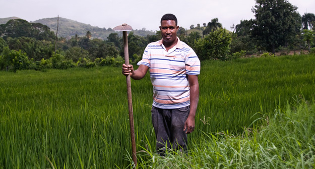 El sector agropecuario en República Dominicana