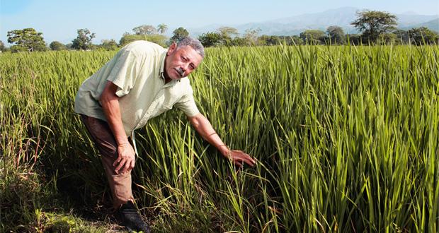 Agricultores dominicanos acceden a servicios microfinancieros