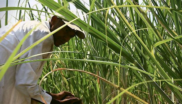 Nuestra capacidad de cosechar no llegaba al 30%, hoy alcanzamos el 70%, Edier Loboa #unahistoriaquecontar