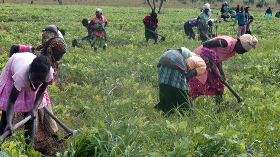 Agricultura y seguridad alimentaria en Angola