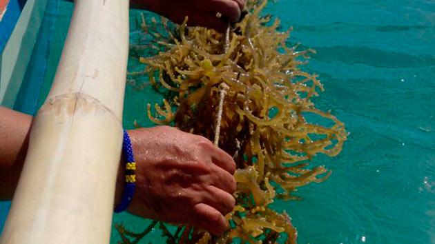 Apoyamos a 9 organizaciones de agricultores de algas a mejorar su producción en Filipinas