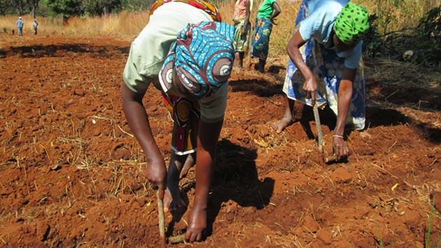 Desde CODESPApro finalizamos una consultoría para el PNUD, en Angola, sobre cadenas de valor