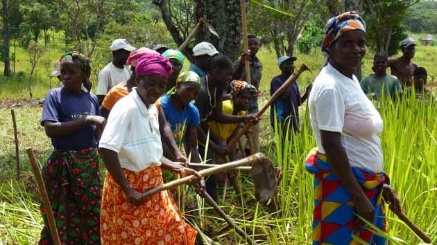 Mejoras en los cultivos de soja en Angola aumentan los ingresos de los agricultores más vulnerables