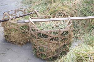 Familias rurales de Vietnam aumentan su producción gracias al uso de fertilizantes compactados