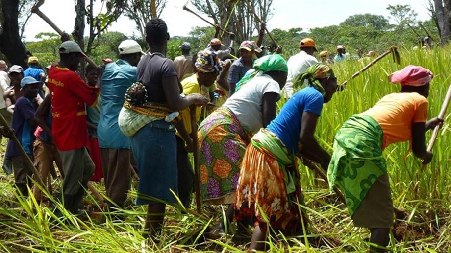 Aumento de los ingresos de pequeños agricultores por medio de la producción de soja