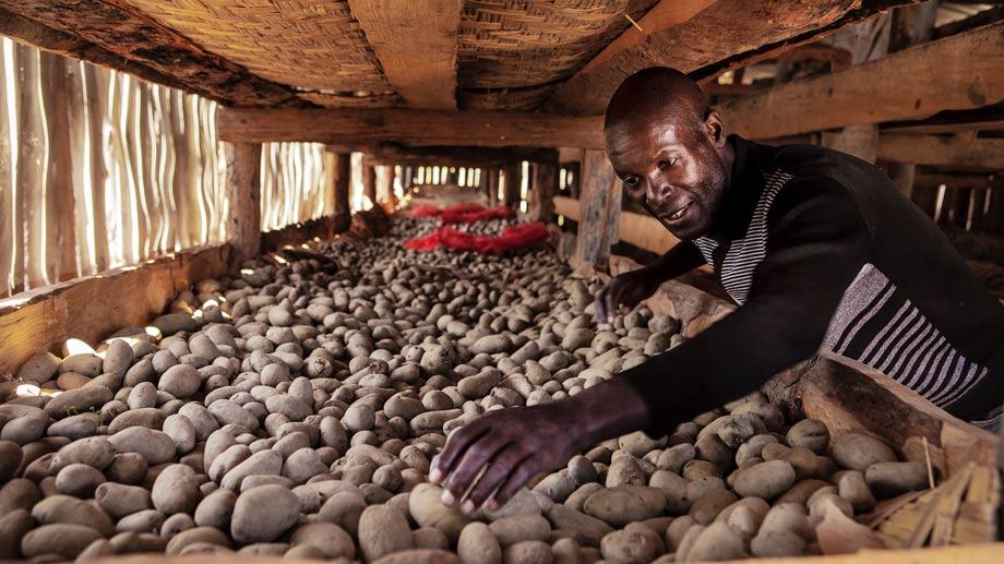 Bancos de semillas de calidad para luchar contra el hambre
