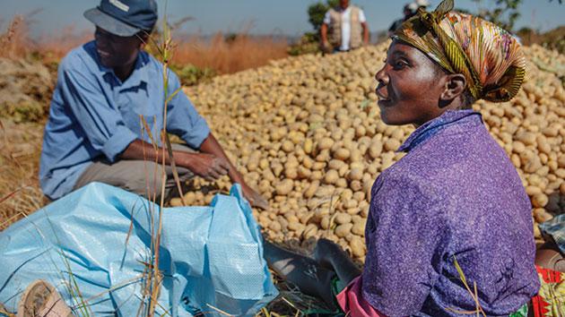 Los bancos de semilla: desarrollo de mercados rurales para acabar con el hambre en Angola