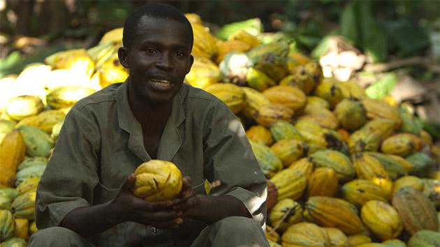 Cacao sostenible y responsable