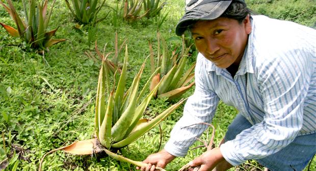 Campesinos sin recursos diversifican su producción para aumentar sus ingresos
