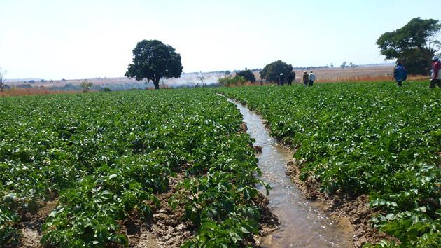 Comprando África: el peligro del modelo de la adquisición de tierras a gran escala