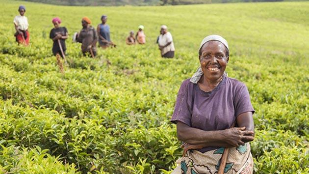 COP21: se llega a un acuerdo para frenar el cambio climático