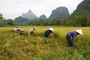 El desarrollo agropecuario puede ser la oportunidad de salir de la pobreza para más de 800 millones de personas