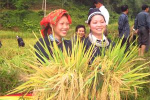 Continúa la expansión de la técnica de fertilización compactada para el desarrollo rural en Tuyen Quang (Vietnam)