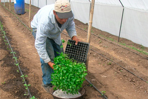 Un sistema de micro riego aumenta un 30% la producción de cosechas en países de Centroamérica