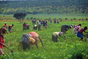 La inseguridad alimentaria, uno de los grandes problemas del continente africano