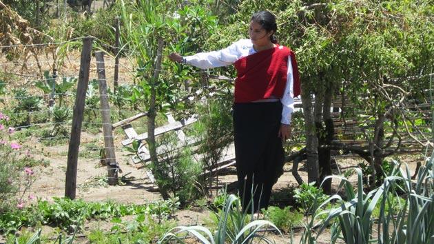 La importancia de la innovación en las microfinanzas para el desarrollo