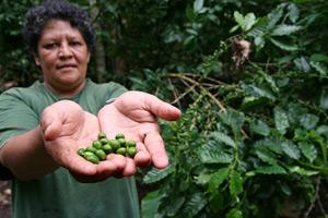 Agricultores de Nicaragua aumentan su producción de frijol y de café gracias al uso de una nueva tecnología de micro riego