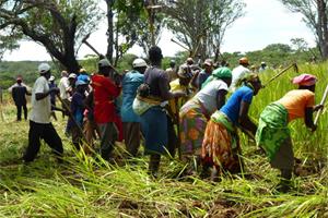 600 familias campesinas mejoran sus condiciones de vida en Angola gracias al cultivo de la soja