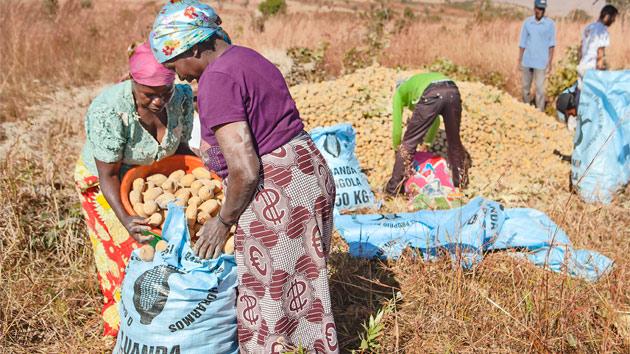 Sementes do Planalto abre su primera tienda de semillas de calidad para luchar contra el hambre en Angola