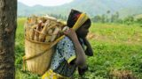 7 cooperativas, lideradas por mujeres, contra el hambre en Goma, R.D. del Congo