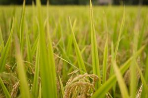 CODESPA presenta dos propuestas a Fundación Biodiversidad en clave de Desarrollo Sostenible