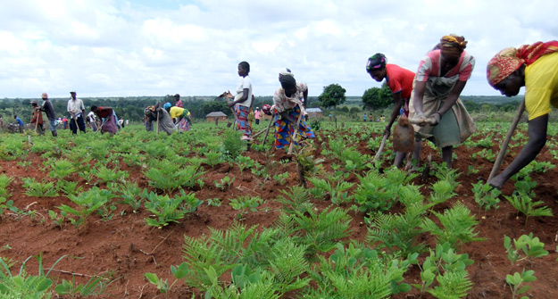 Tras 8 años, se legalizan las primeras tierras en Angola